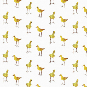 smaller yellow birds