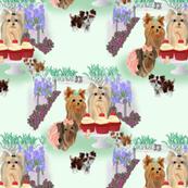 Yorkie - Birthday Garden Party