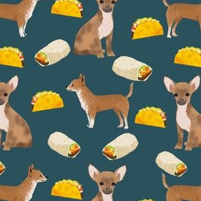 chihuahua tacos food dog burrito funny cute dog pet dog