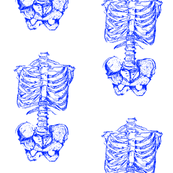 Skeleton Blue and White
