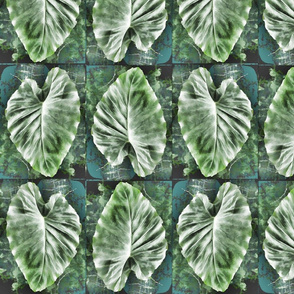 elephant ear blue green background