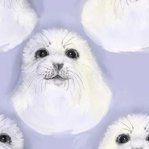 Baby Harp Seal Portrait 2
