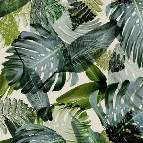 Banana leaf tropical palm Hawaii