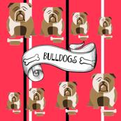 Bulldogs big & small