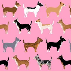 chihuahua dogs pet dog cute pink dogs fabric dog coats and colors merle piebald black and tan irish marked chihuahuas fabric