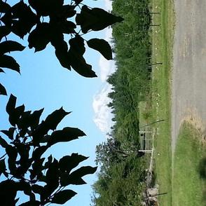 Mt. Rainier with apple tree frame