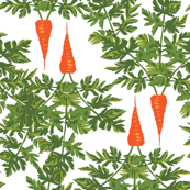 Rows of Carrots with Green Tops