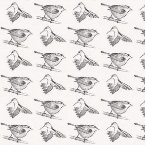 humming bird and wren