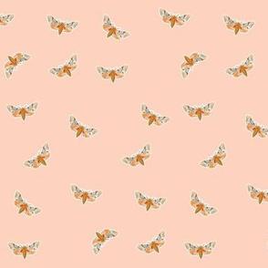 Moth Soft Peach