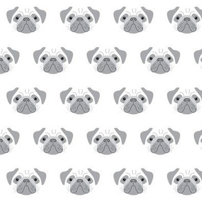 pugs - grey and white