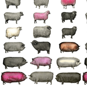 Sheep and Pinks Large