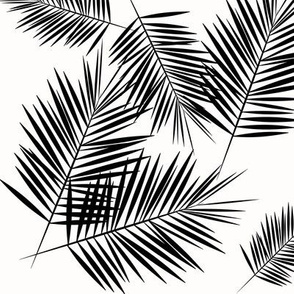 Fern palm leaves - black and white monochrome palm  tree tropical summer beach || by sunny afternoon