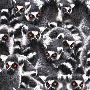 Lemur grey