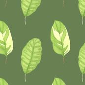 Luscious Leaves