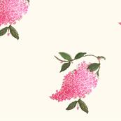 Botanical l