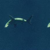 Shark in darkness