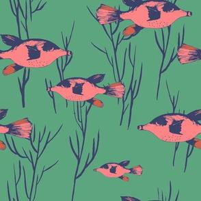 oceana_pufferfish_marine