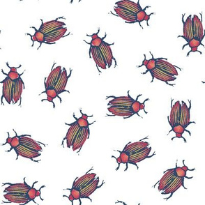 beetles for Matisse