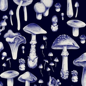 Dark blue mushrooms