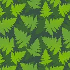 Jungle ferns
