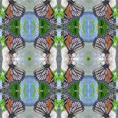 Butterfly_2_Pattern
