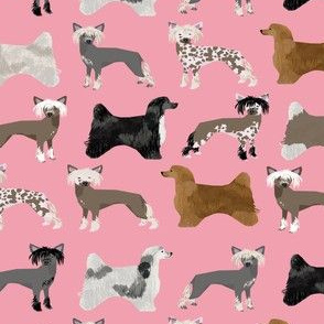 chinese crested dogs hairless dog powderpuff cute dog pets pet design fabric for dog lovers