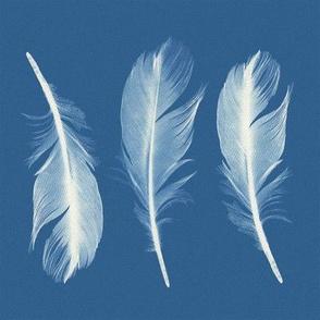 Feathers Cyanotype