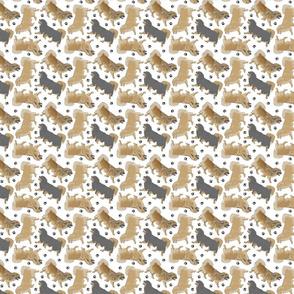Trotting Tibetan Spaniels and paw prints - tiny white