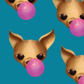chihuahua-gum