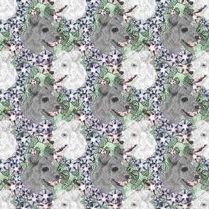 Floral Pumi portraits