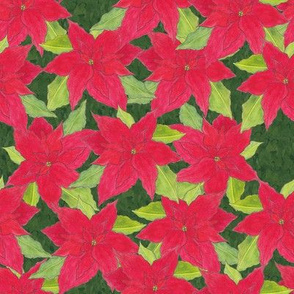 Poinsettias on green