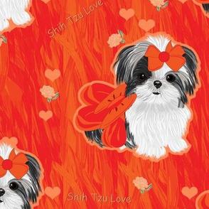 Shihtzu Tangerine Love