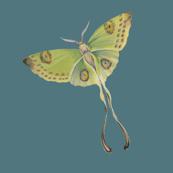 Luna Moth Teal background