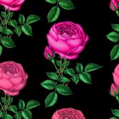 Redoute_rose/ Pink Rose Botanical Art