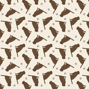Tiny Chocolate Labrador Retrievers - tan