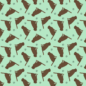 Tiny Chocolate Labrador Retrievers - green