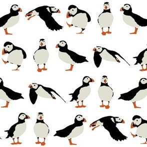 just puffins on white