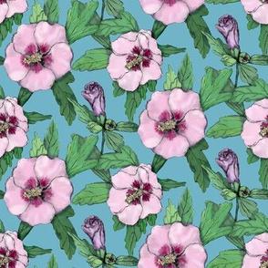Hibiscus - blue