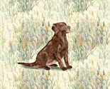 Rrchocolate_lab_sitting_in_wildflowers_2_thumb