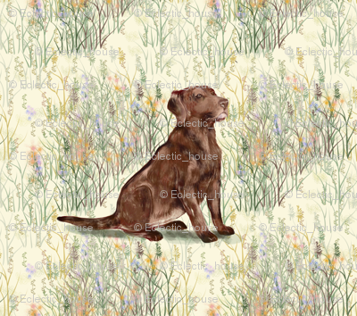 Rrrchocolate_lab_sitting_in_wildflowers_2_preview