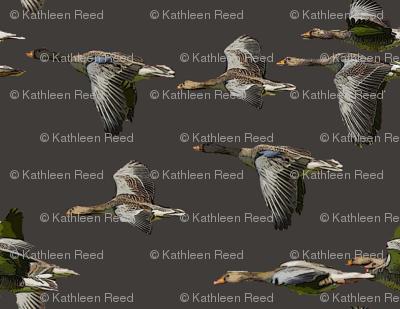 Rwild_bird_flight2_preview