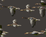 Rwild_bird_flight2_thumb