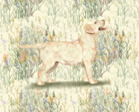 Yellow_lab_in_field_of_wildflowers_rev_thumb