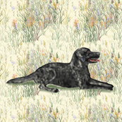 Black Lab Lying in Wildflowers 2