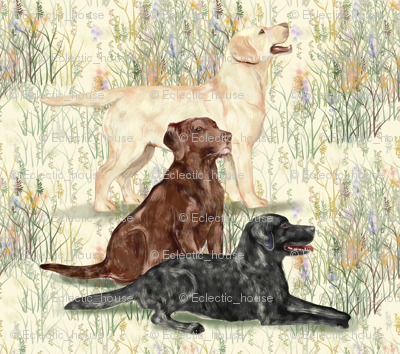 Rrchocolate_yellow_and_black_lab_in_wildflowers_2_preview
