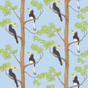 Hornbills in a tree blue background
