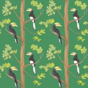 hornbills in the tree, green