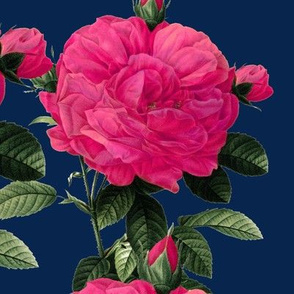 Redoute' Roses ~ Hot Pink on Dover