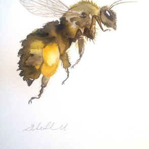 Honey bee by Liz H Lovell