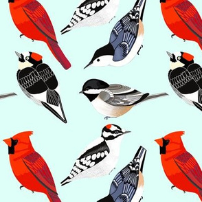 Songbirds and Woodpeckers